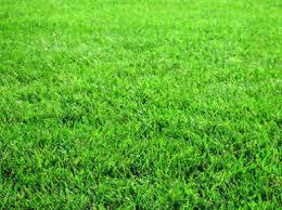 Приобретайте газонную траву на сайте landshaft-design.kiev.ua