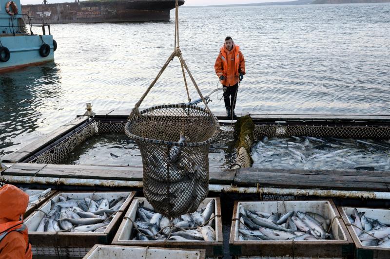 Какой кодекс сохранил лосося и треску на наших столах