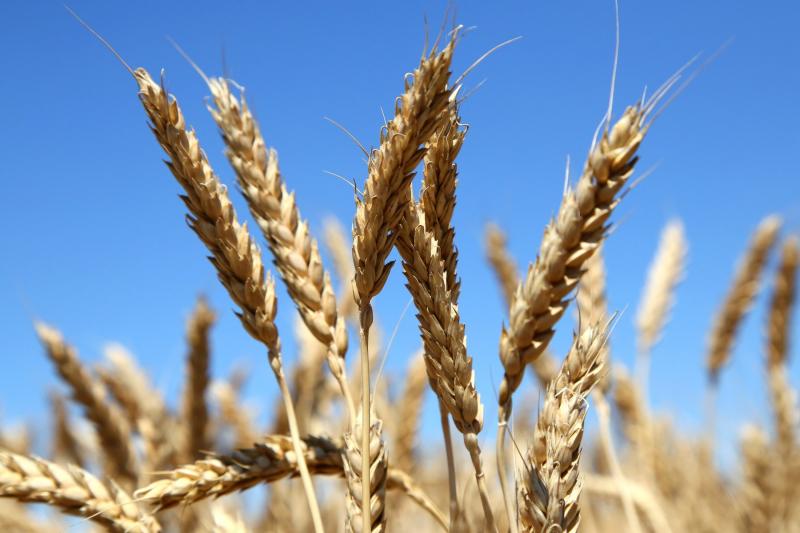 Новый законопроект о страховании защитит аграриев от ЧС