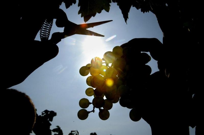 Россияне стали пить больше отечественного вина