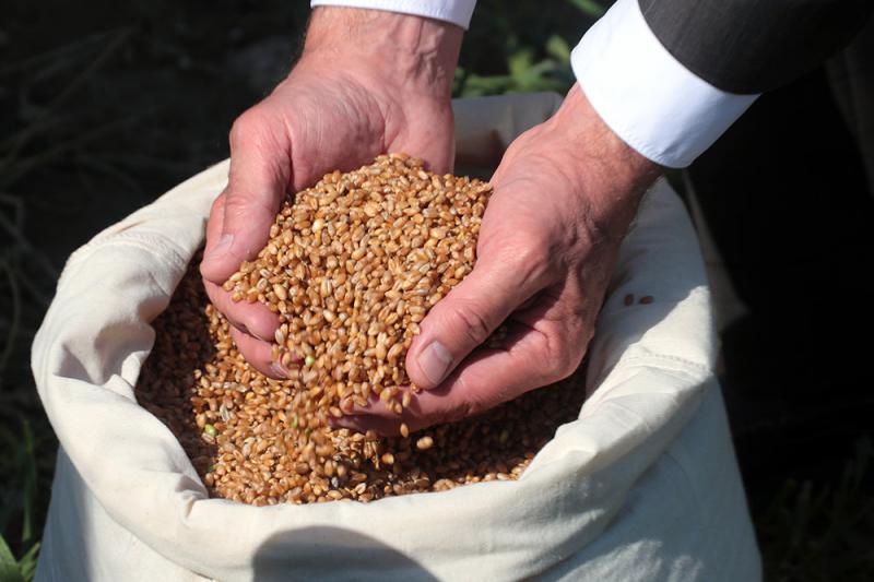 Плавающая пошлина на зерно будет впервые установлена с 1 июня