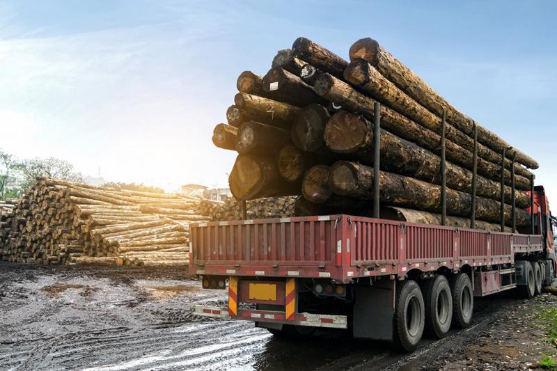 «Черные лесорубы» нанесли за год ущерб лесам на 12,3 млрд рублей
