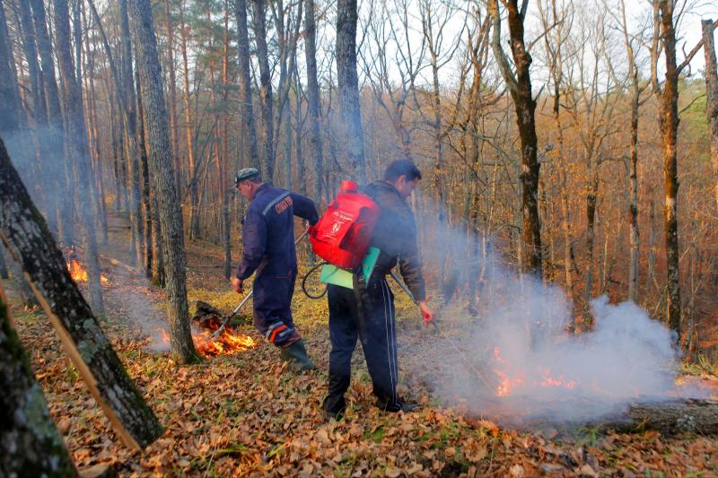 Регионы получат 2,8 млрд рублей на тушение лесных пожаров