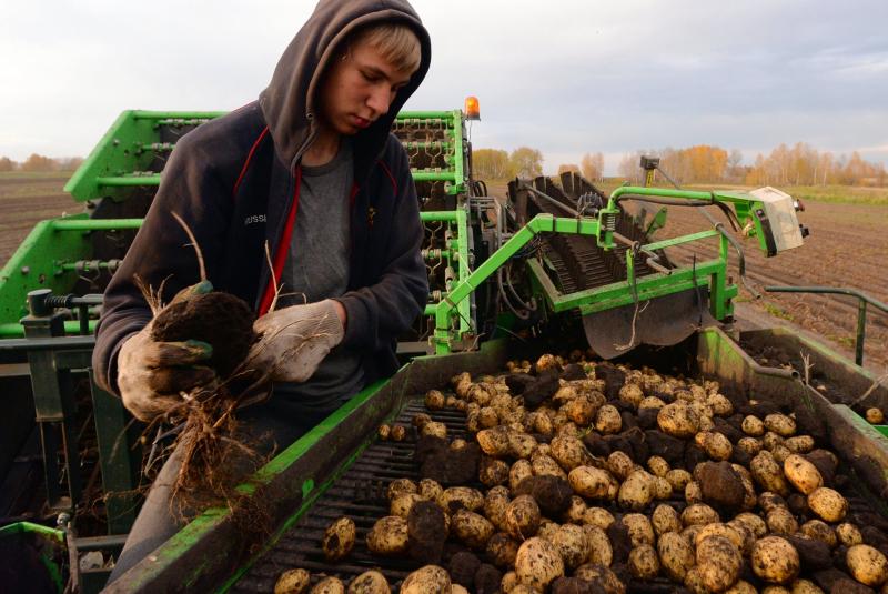 В Минсельхозе рассказали, ждать ли россиянам дефицита картофеля в этом году